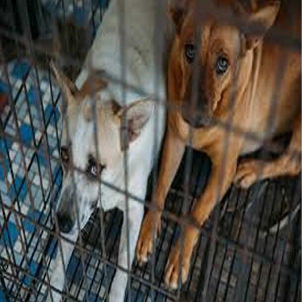 Crueldade contra animais como denunciar